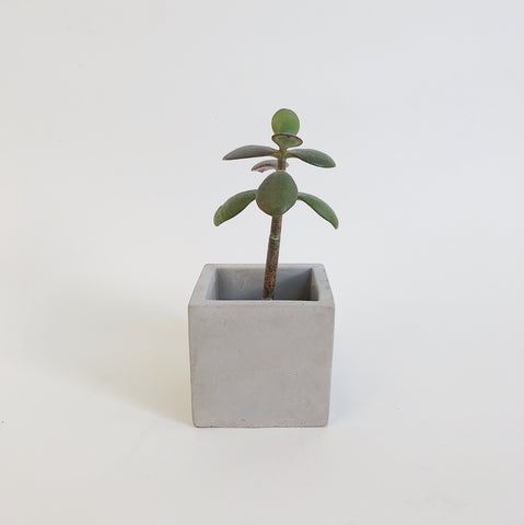 Johan - Concrete Planter - Portland, Oregon