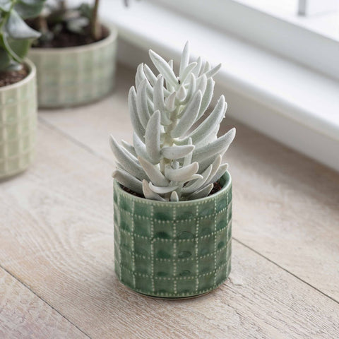 Medium Foliage Green Sorrento Pot