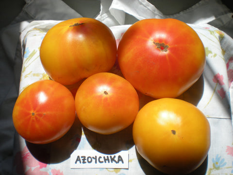 """Azoychka"" Tomato Seeds - Edible Antiques"