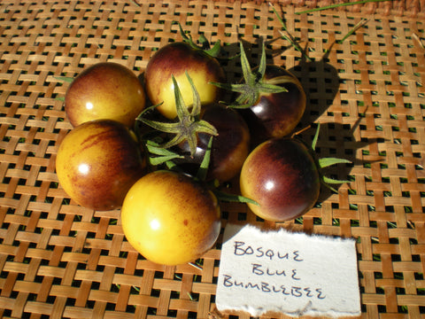 """Bosque Blue Bumblebee"" Tomato Seeds - Edible Antiques"