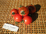 """Blue Tears"" Tomato Seeds - Edible Antiques"
