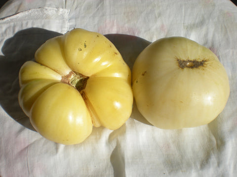 """Beaute Blanche du Canada"" Tomato Seeds - Edible Antiques"