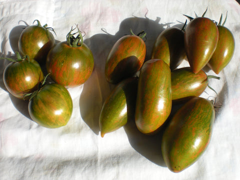 """3C3"" Tomato Seeds - Edible Antiques"