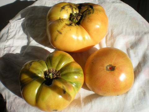 """Jaune de St.Vincent"" Tomato Seeds - Edible Antiques"