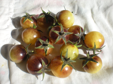 """Amethyst Cream"" Tomato Seeds - Edible Antiques"