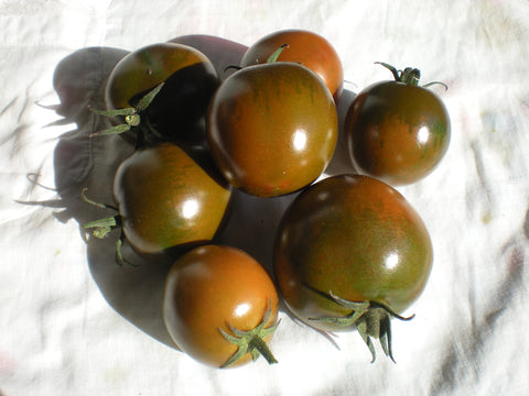 """Camone"" Tomato Seeds - Edible Antiques"