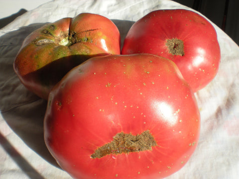 """Missouri Love Apple"" Tomato Seeds - Edible Antiques"