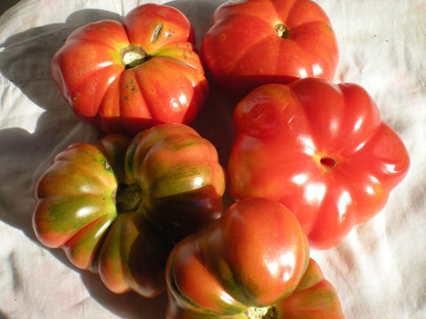 """Early Large Red"" Tomato Seeds - Edible Antiques"
