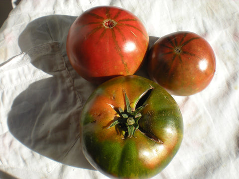 """Black Altai"" Tomato Seeds - Edible Antiques"
