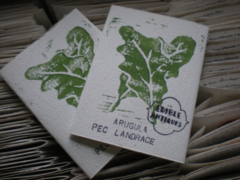 """PEC Landrace"" Arugula Seeds - Edible Antiques"