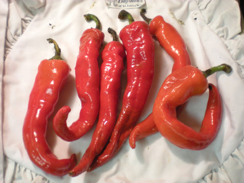 """Hot Portugal"" Pepper Seeds - Edible Antiques"