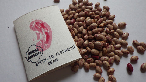 """Speckled Algonquin"" Bean Seeds"
