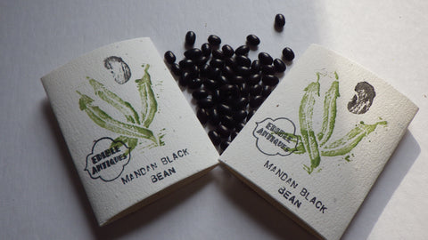 """Mandan Black"" Bean Seeds"