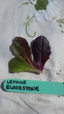 """Bloodstone"" Lettuce Seeds"