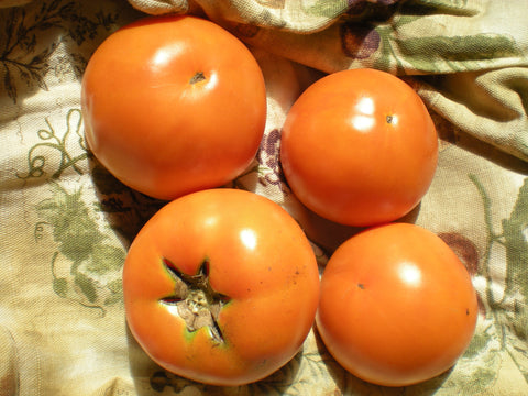 """Caro Rich"" Tomato Seeds - Edible Antiques"