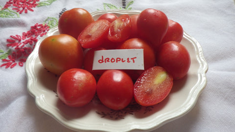 """Droplet"" Tomato Seeds"