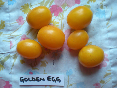 """Golden Egg"" Tomato Seeds - Edible Antiques"