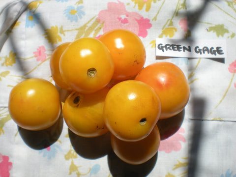 """Green Gage"" Tomato Seeds - Edible Antiques"