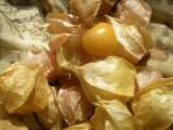 """Ground Cherry"" Physalis Seeds - Edible Antiques"