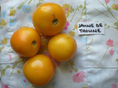 """Jaune de Thoune"" Tomato Seeds - Edible Antiques"
