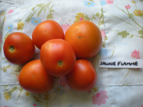 """Jaune Flamme"" Tomato Seeds - Edible Antiques"