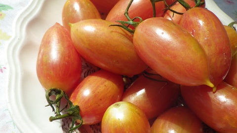 """Maglia Rosa"" Tomato Seeds (back for 2017!)"