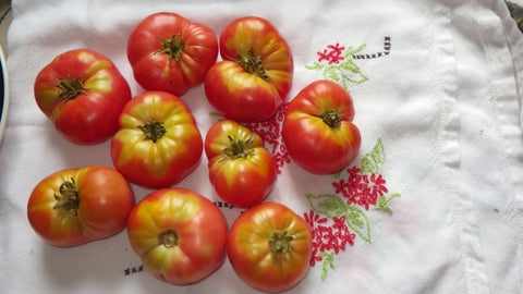 """New Big Dwarf"" Tomato Seeds"
