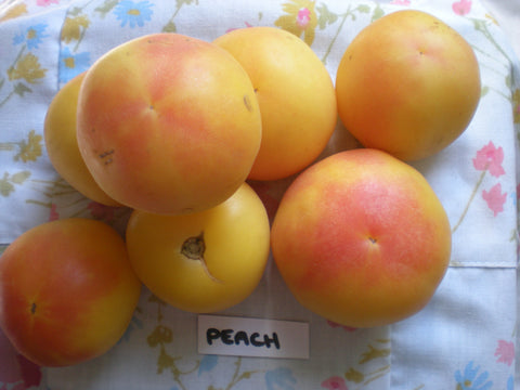 """Wapsipinicon Peach"" Tomato Seeds - Edible Antiques"