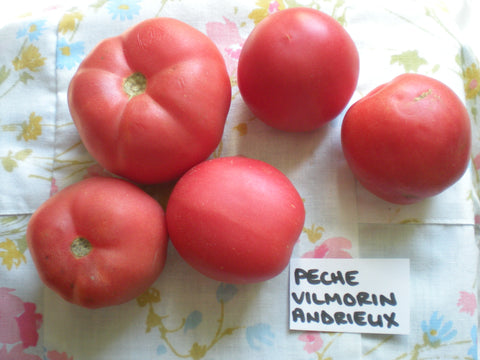 """Peche Vilmorin Andrieux"" Tomato Seeds - Edible Antiques"