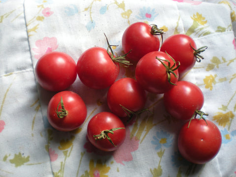"""Pink Ping Pong"" Tomato Seeds - Edible Antiques"