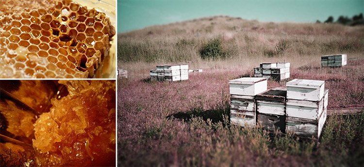 Artisanal Honey Terroir | Firecracker Journal