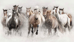 Horses running free contemporary photography at Viavi Gallery