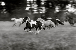 Horses at the Ranch I Tom Kirkendall