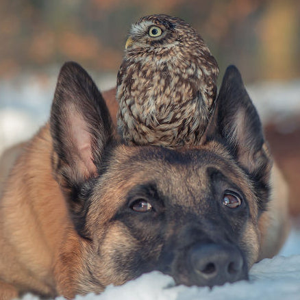 Unlikely Animal Friendships, Love or Instinct, Featuring Ingo and Poldi