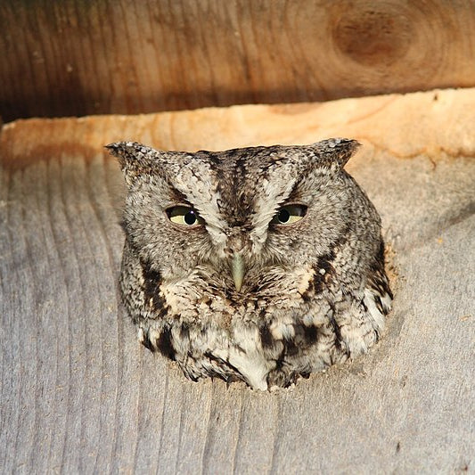 How to Build an Owl House