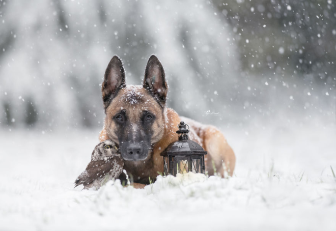 dog and owl friends, Ingo and Poldi, cuddling in the snow