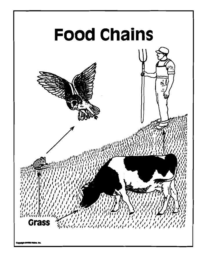 Two Simple Food Chains Transparency