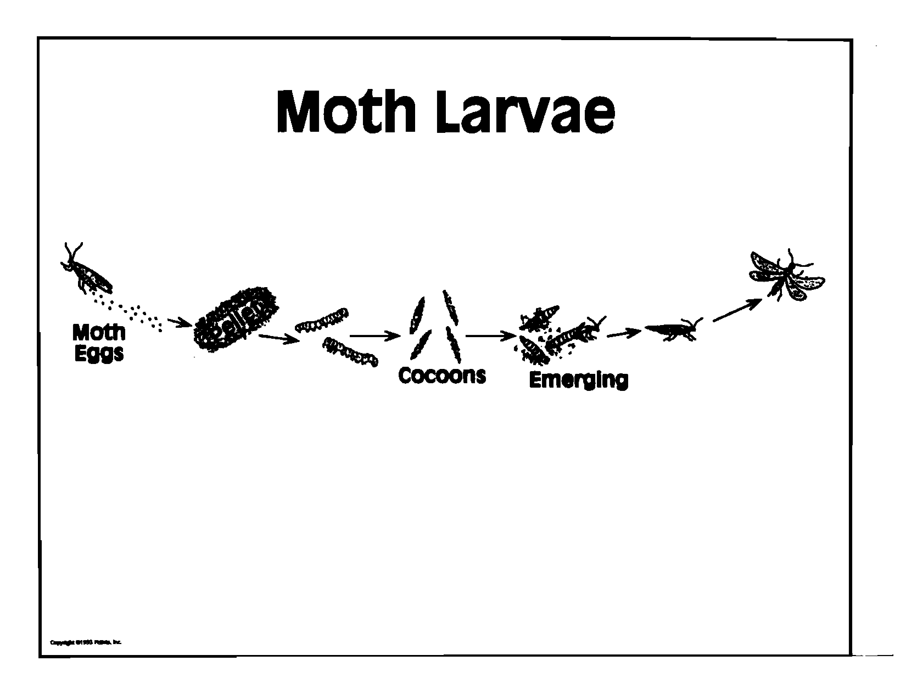 Moth Life Cycle Transparency