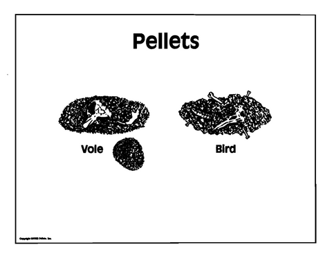 The Pellet Transparency