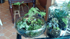 Glass Bowl Garden