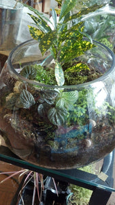 Glass Jar Terrarium