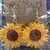 Metal Sunflower Dangle Earrings