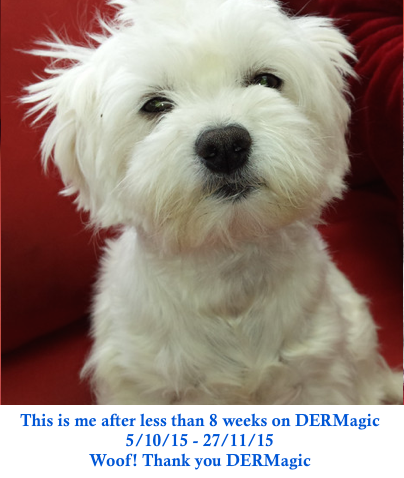 Boof the white maltese terrier beats hair loss and skin disease using natural pet products