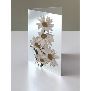 DANDY STAR SILVER DAISIES GREETING CARD