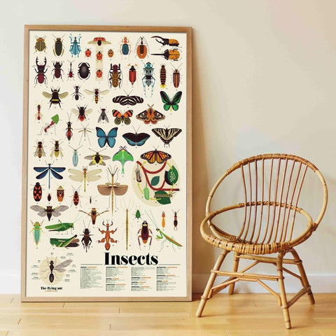 poppik sticker discovery poster insects