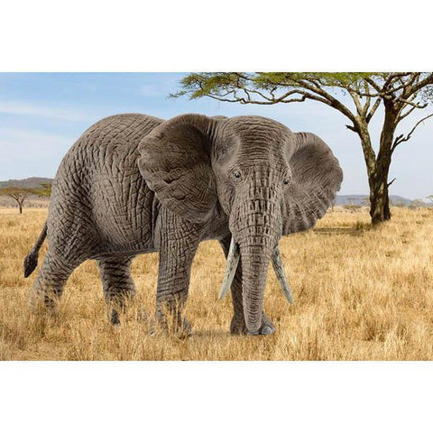 Schleich African elephant female-people, animals & lands-Schleich-Dilly Dally Kids
