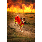 Petsafe Jacket Fire Retardant Pet Jacket
