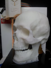 3D Printer Skull from High resolution 3d scan