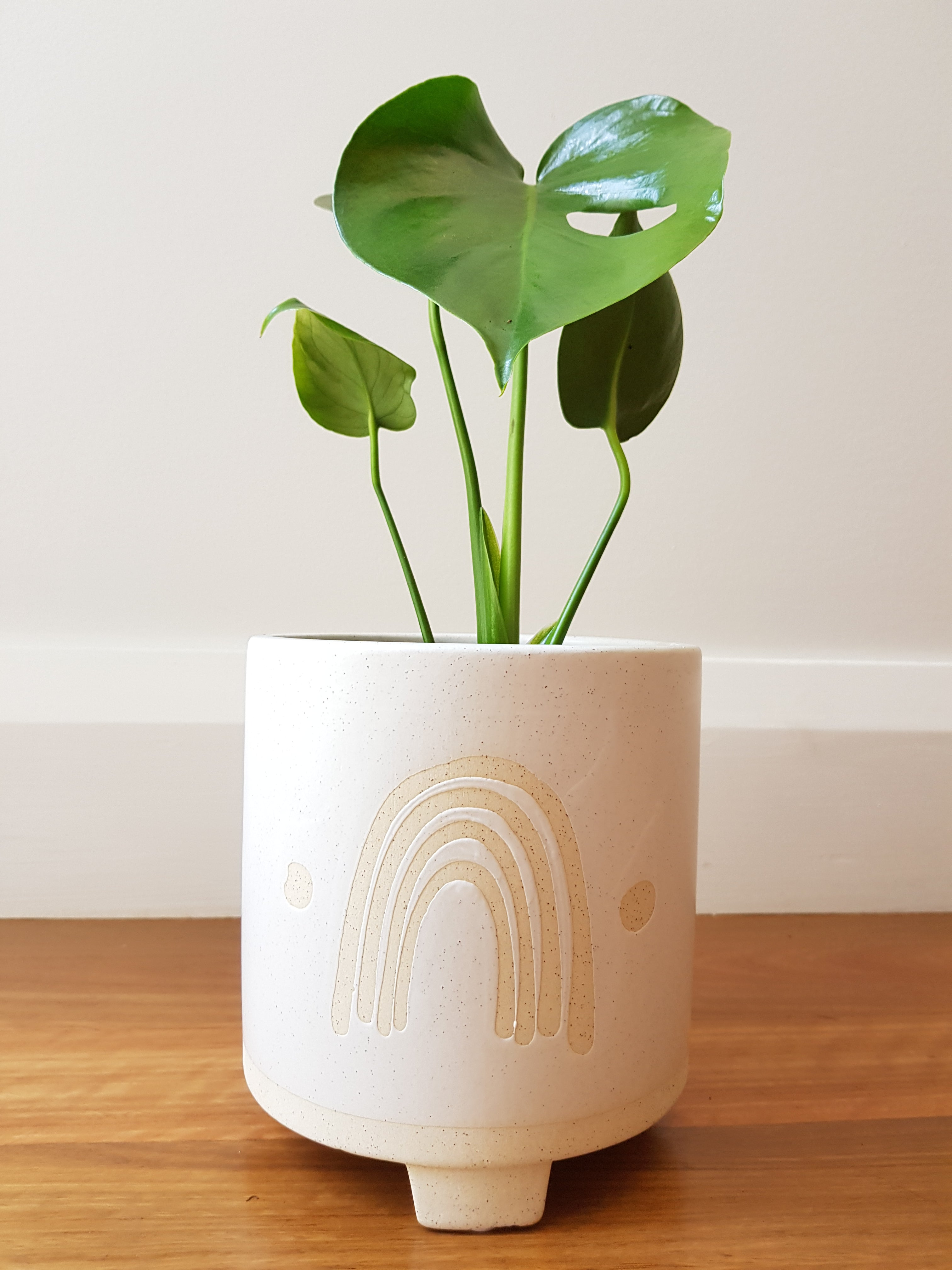 Monstera - Rainbow Planter