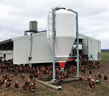 World's Biggest Mobile Poultry Shed ….. and it's Fully Automatic!